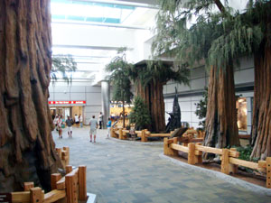 airport trees